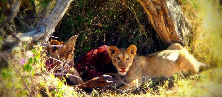 Voyager au Kenya